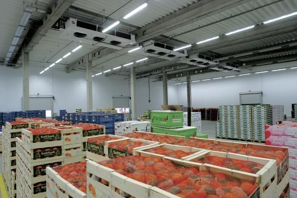 Украина теряет 65% овощей и фруктов из-за неправильного хранения фото, иллюстрация
