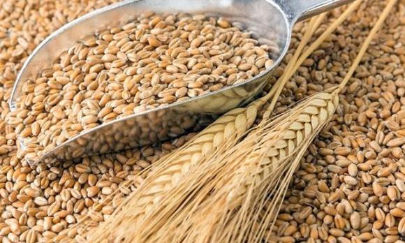Українська зернова асоціація знизила прогноз урожаю фото, ілюстрація