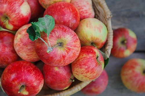 Українські садівники в черговий раз оновили рекорд з експорту яблук фото, ілюстрація