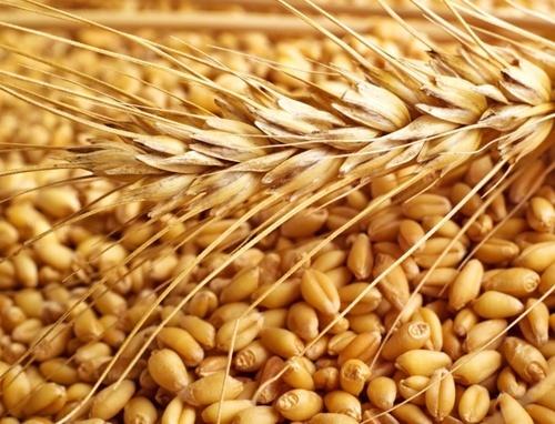 Єгипетська державна компанія GASC змінить умови оплати пшениці, закупленої через міжнародні тендери фото, ілюстрація