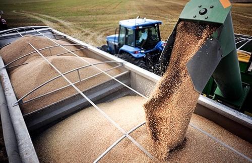 Зерновозів в Україні достатньо, необхідно перейти від сезонності до цілорічного перевезення зерна, – Андрій Рязанцев фото, ілюстрація