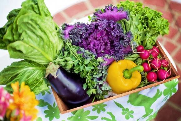Україна експортує близько 80% виробленої органічної продукції фото, ілюстрація