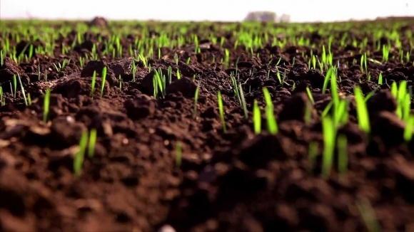 Вегетація озимих культур відновилася на 15 днів раніше фото, ілюстрація
