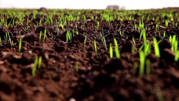 Вегетация озимых культур восстановилась на 15 дней раньше фото, иллюстрация