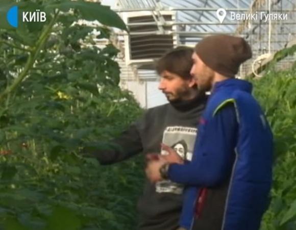 Дві тисячі фермерів на Київщині створили кооператив по вирощуванню органічних овочів фото, ілюстрація