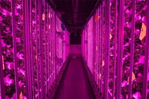 Французький стартап створює вертикальні ферми для вирощування полуниць фото, ілюстрація