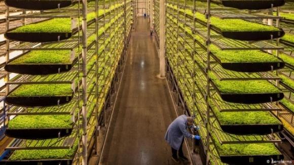 В ОАЭ научились выращивать овощи и фрукты без воды и почвы фото, иллюстрация