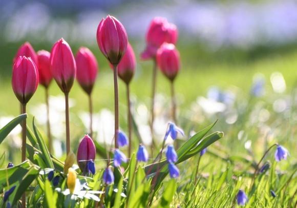 Вітаємо з прекрасним днем весни! фото, ілюстрація