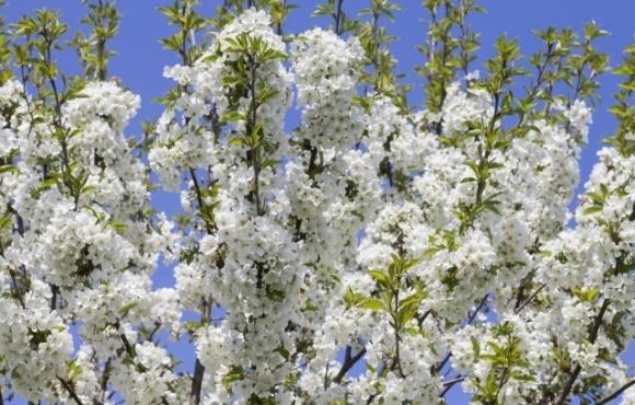 Херсонские садоводы спасают свои насаждения от заморозков с помощью пчел фото, иллюстрация