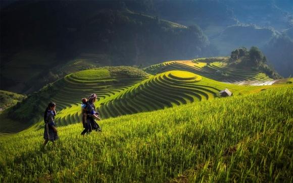 В'єтнам має намір обмежити імпорт пестицидів фото, ілюстрація