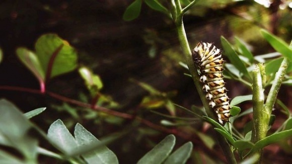 Вчені з'ясували, що рослини попереджують одна одну про шкідників фото, ілюстрація