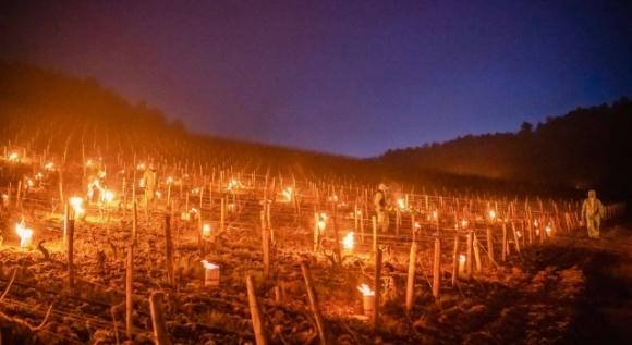 Из-за неурожая винограда Франция заявила о крупнейшей агрономической катастрофе XXI века фото, иллюстрация