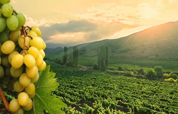 Брат короля Швеции собирается делать вино в оккупированном Крыму фото, иллюстрация