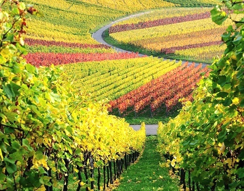 Успішні винороби України про яких варто знати фото, ілюстрація