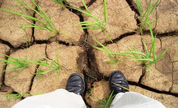 Спутниковые данные помогут аграриям экономить воду фото, иллюстрация