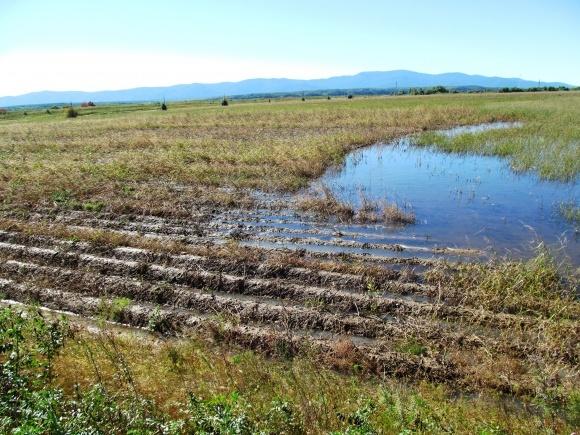 У трьох регіонах тала вода могла завдати значної шкоди озимим фото, ілюстрація