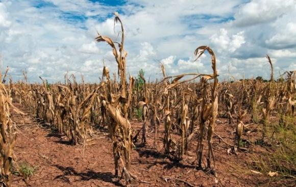 Україна втратила мільйони тонн зерна у 2020 році через зміну клімату. Що робити? фото, ілюстрація