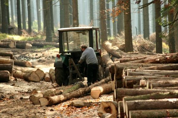 В Україні незаконно вирубали 24 тис кубометрів лісу у 2015 році фото, ілюстрація