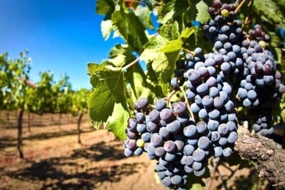 Уряд надасть підтримку садівникам, виноградарям та хмелярам фото, ілюстрація