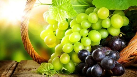 Виноградарі та винороби підбили підсумки діяльності за останні 26 років фото, ілюстрація