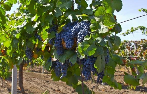 Бывшие винсовхозы Закарпатья пребывают в ужасном состоянии фото, иллюстрация