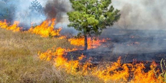 Фахівці компанії BASF спростовують міфи щодо випалювання старої трави фото, ілюстрація