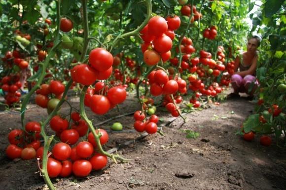 Компания Agrofusion увеличила экспорт в ЕС в 30 раз фото, иллюстрация