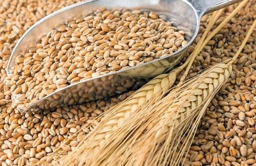 Експорт українського зерна з початку сезону досяг 48.9 млн тон фото, ілюстрація