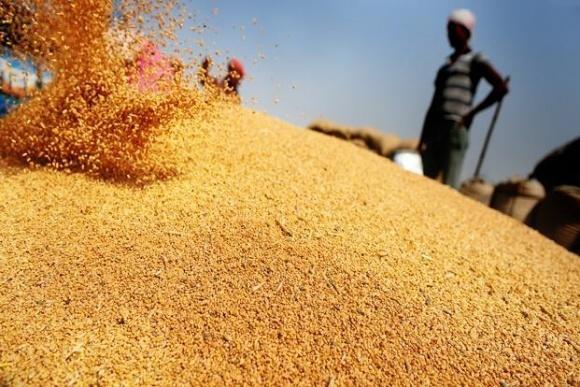 Мировые цены на пшеницу продолжают расти третий месяц подряд фото, иллюстрация