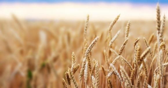 Ristone Holdings подвел итоги агропроизводства в 2020 году фото, иллюстрация