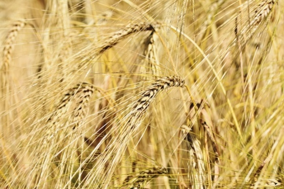 У І півріччі 2020 року експорт вітчизняних зернових залишився на рівні минулого року, — ННЦ фото, ілюстрація