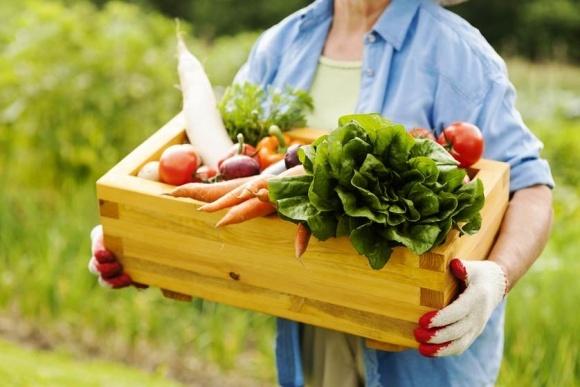 Сегмент органических овощей показывает устойчивый рост фото, иллюстрация
