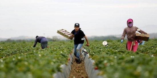 Трудовой кризис в плодово-ягодной сфере наблюдается во всем мире фото, иллюстрация