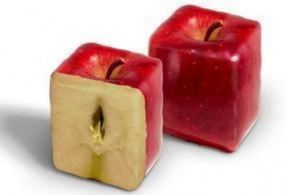 Как выращивать квадратные яблоки фото, иллюстрация