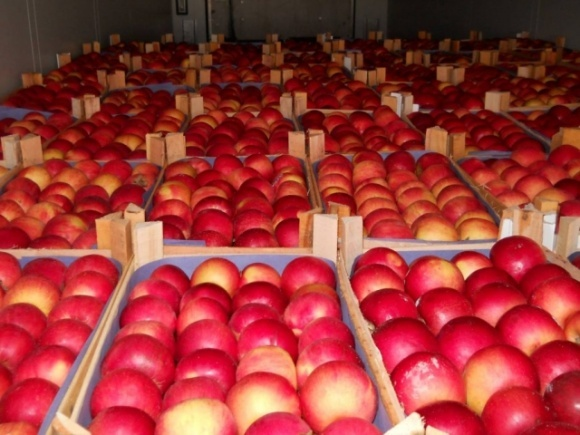 Мировой рынок яблок существенно меняется фото, иллюстрация