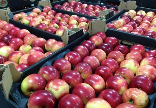 """В """"Укрсадпромі"""" знають, як зробити прорив в експорті яблук фото, ілюстрація"""
