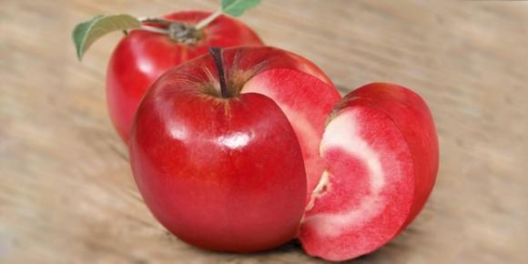 """ФГ """"Коник"""" зібрало перший урожай яблук із червоним м`якушем фото, ілюстрація"""