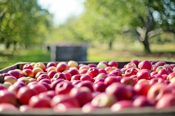Дешевих яблук не буде фото, ілюстрація