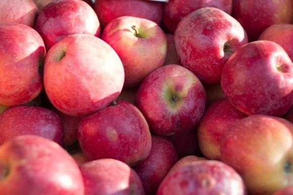 Україна збере значно менше яблук, ніж торік фото, ілюстрація