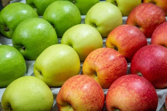 Урожай яблук в Україні знизився фото, ілюстрація