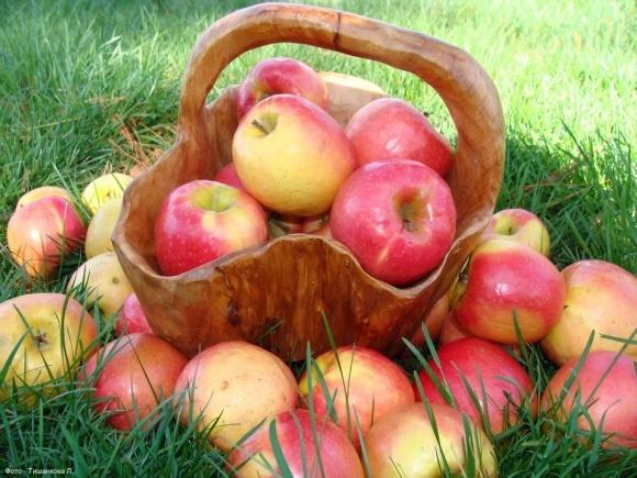В України з'явилась нагода реалізувати свої фрукти до Угорщини фото, ілюстрація