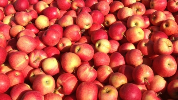Высокие цены на яблоки на внутреннем рынке тормозят экспорт фото, иллюстрация