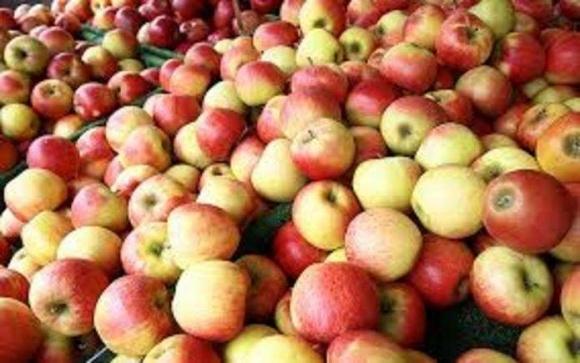 Перший контейнер українських яблук відправився до Еміратів фото, ілюстрація