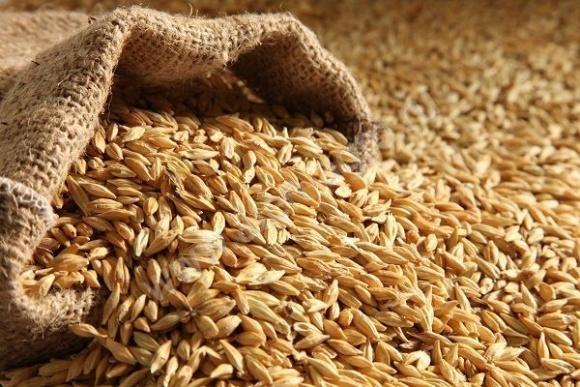 Аграрии сообщают о снижении урожайности пшеницы и качества ячменя фото, иллюстрация