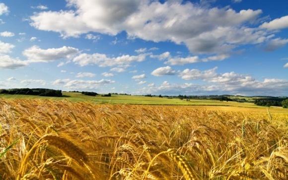 Ученые сделали серьезный шаг к выведению новых высокоурожайных сортов пшеницы и ячменя фото, иллюстрация