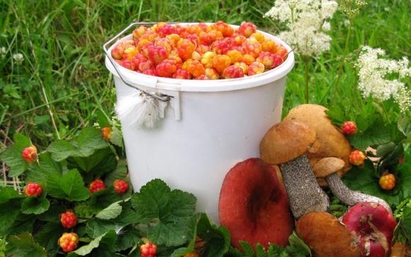 В Беларуси не каждый может бесплатно собирать в лесу грибы и ягоды фото, иллюстрация