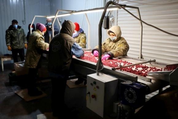 Українські фермери готові платити сезонним робітникам у півтора рази більше, ніж іноземні фото, ілюстрація
