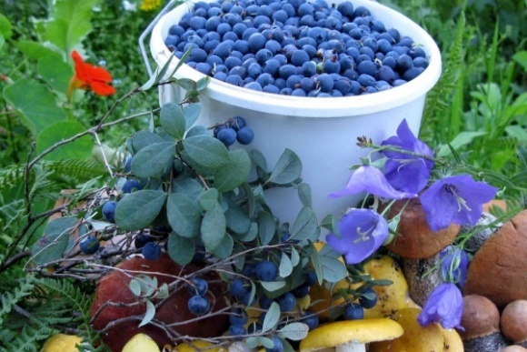 Нидерланды заинтересованы в украинских нишевых продуктах фото, иллюстрация