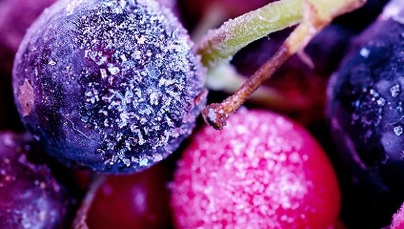 Агролайфхак: как выбрать температуру транспортировки ягод фото, иллюстрация