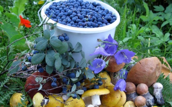 Українці відкрили сезон збору ягід і грибів у Білорусі фото, ілюстрація